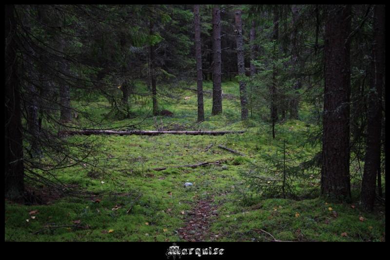 Нет лесов красивее этого!