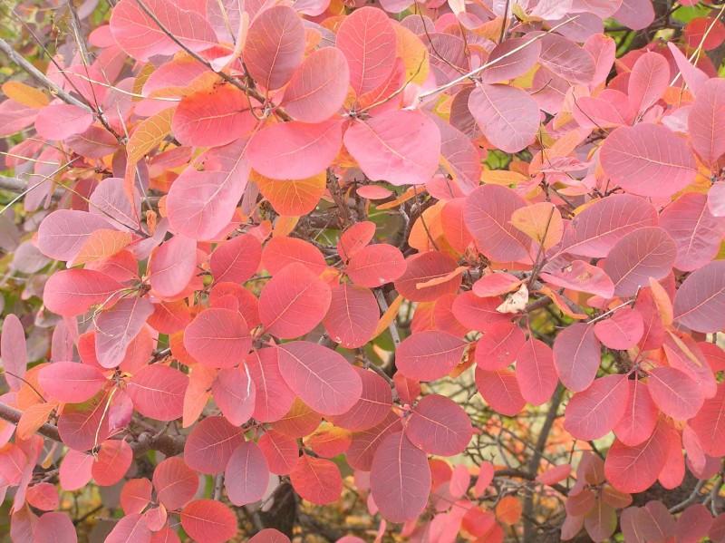 Осенний багрянец