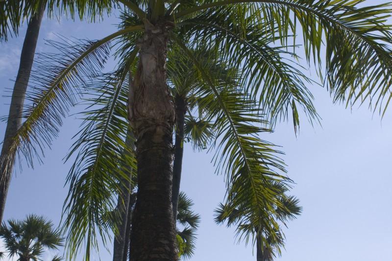 Простая пальма