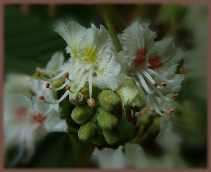 Каштанов цвет