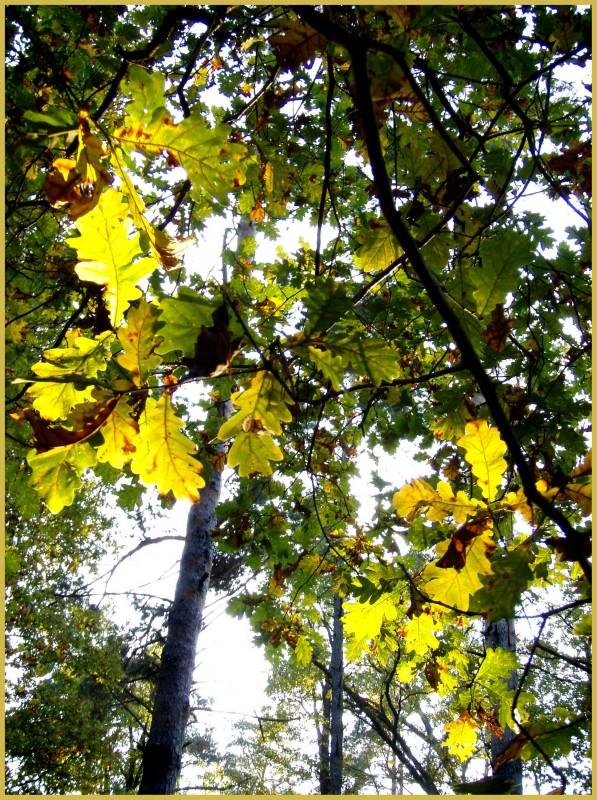 Солнечные листья