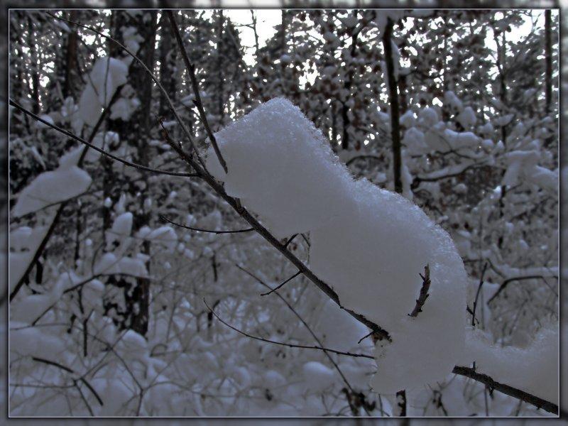 Снежный гость средних широт:)