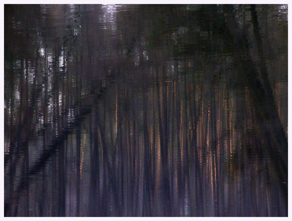 Лесные глубины