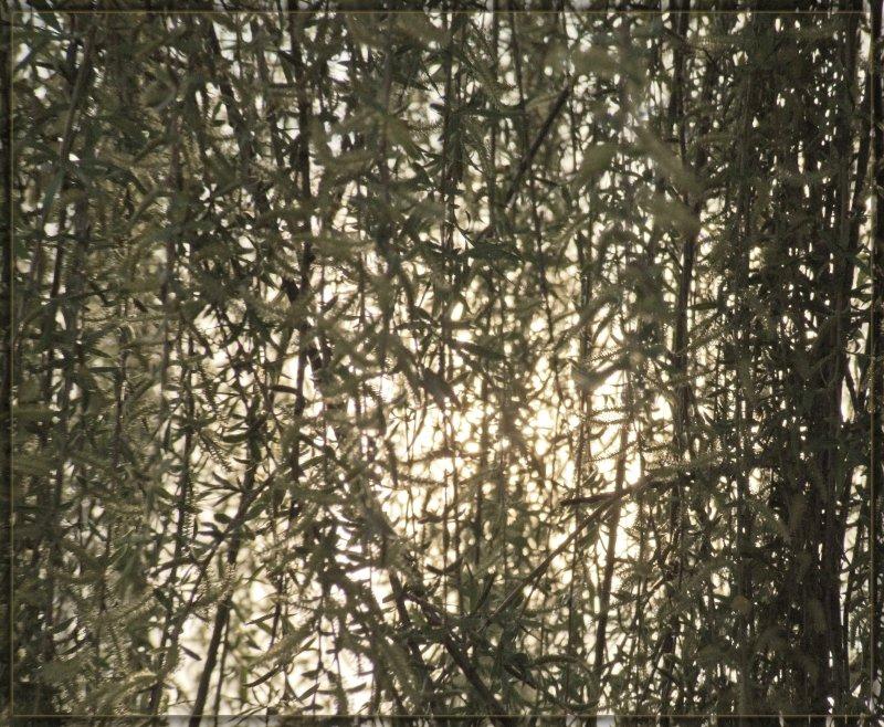 Запуталось солнце в ветвях. Как распутать?...