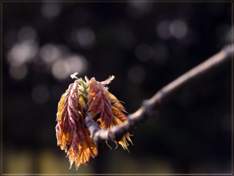 Весна в осенних тонах