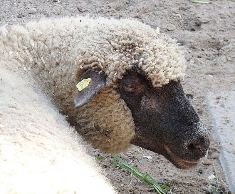 Мы бедные овечки ,,,