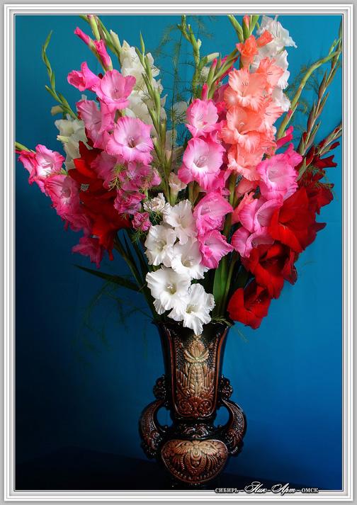 Открытки с цветами гладиолусами 603