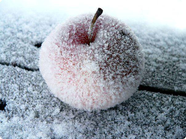 светят прощальным светом яблоки на снегу