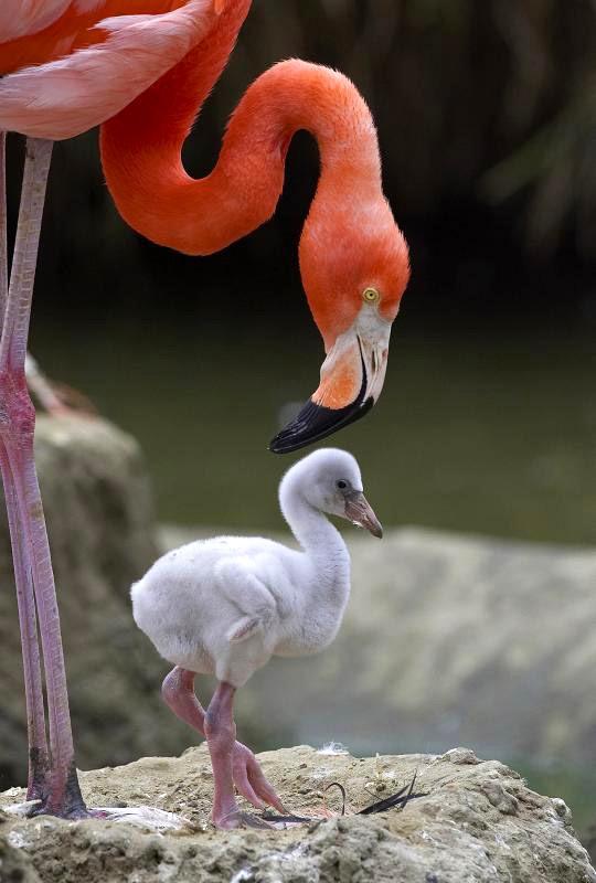 Мир розовых фламинго
