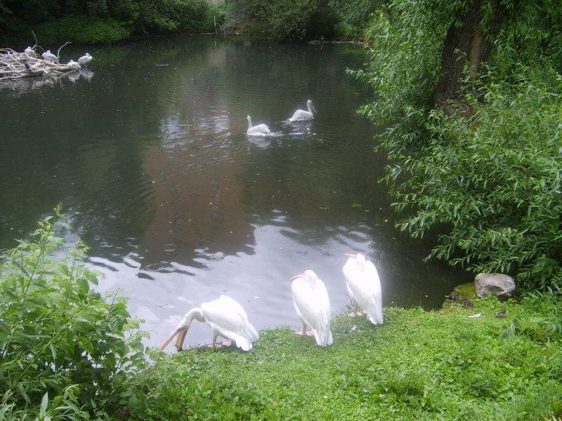 Это мы в зоопарк ездили, пеликанов смотреть:))