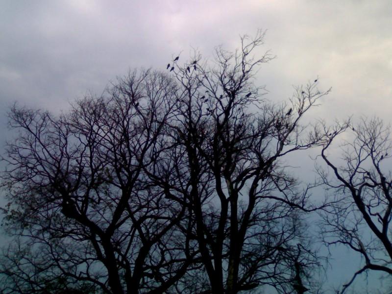 """""""Осеннее"""" дерево"""