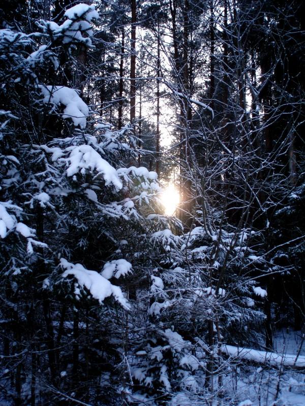 Свет в моем окне