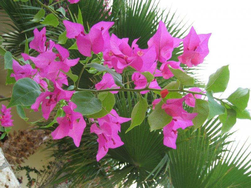 цветы Египта