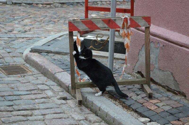 котик в Риге