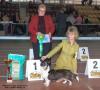 """""""Nutro Cup"""", speciality corgi show, Moskov, 5 apr 2008"""