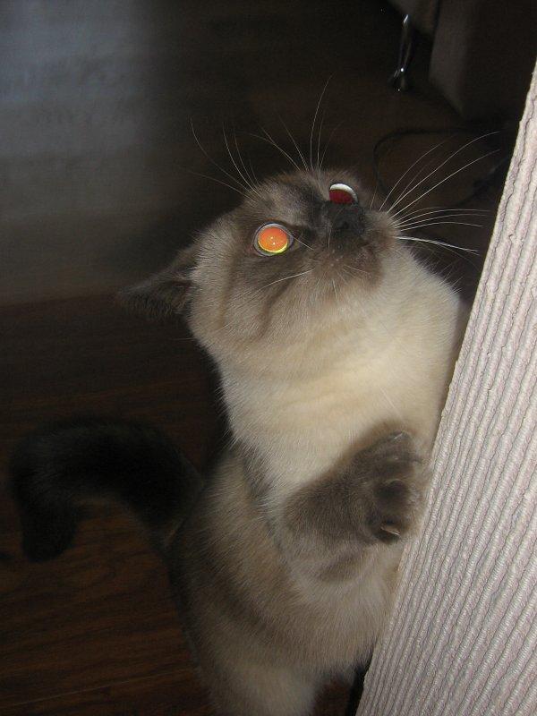 Кот игрок! Кот охотник!