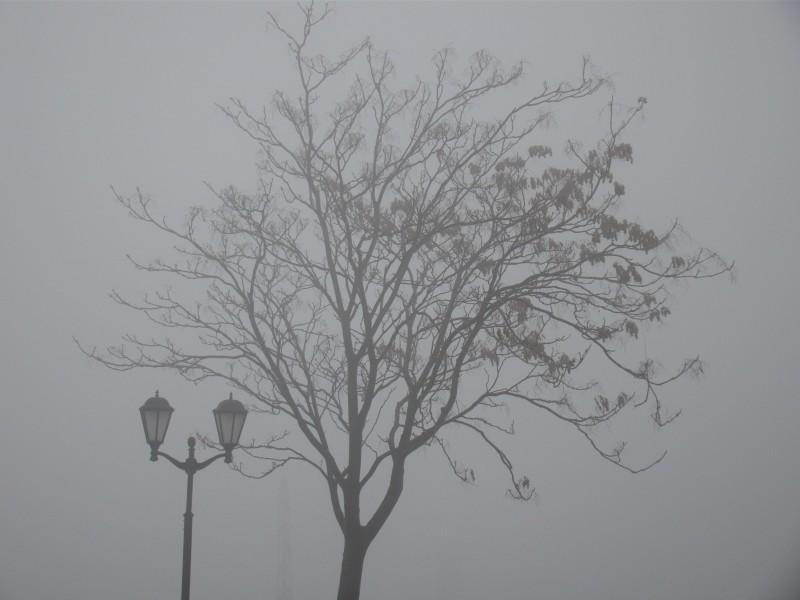Фонарь и дерево