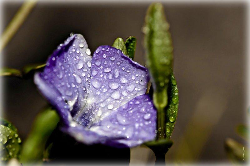 ...под дождем