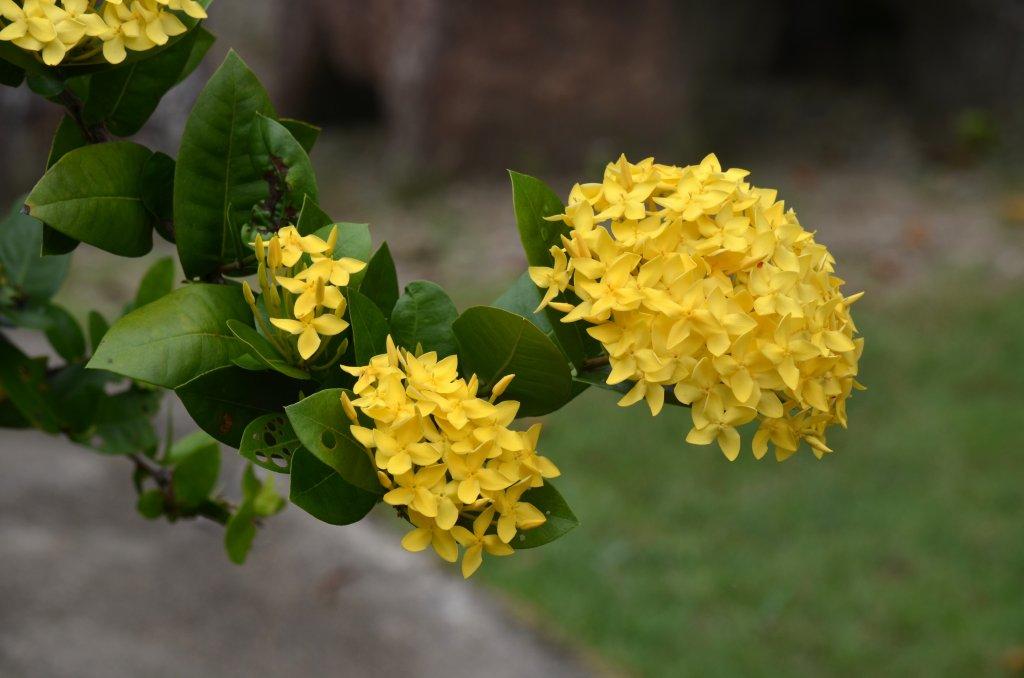 Неизвестный науке цветок