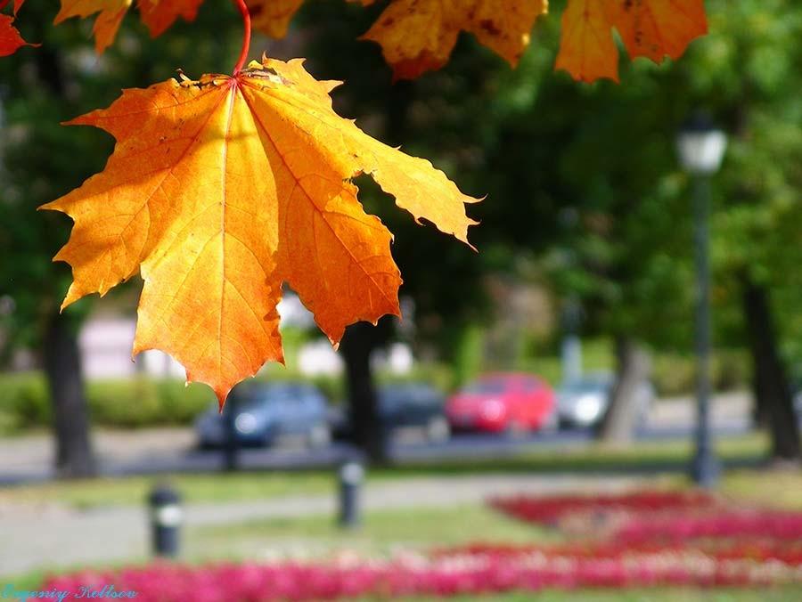 и снова осень