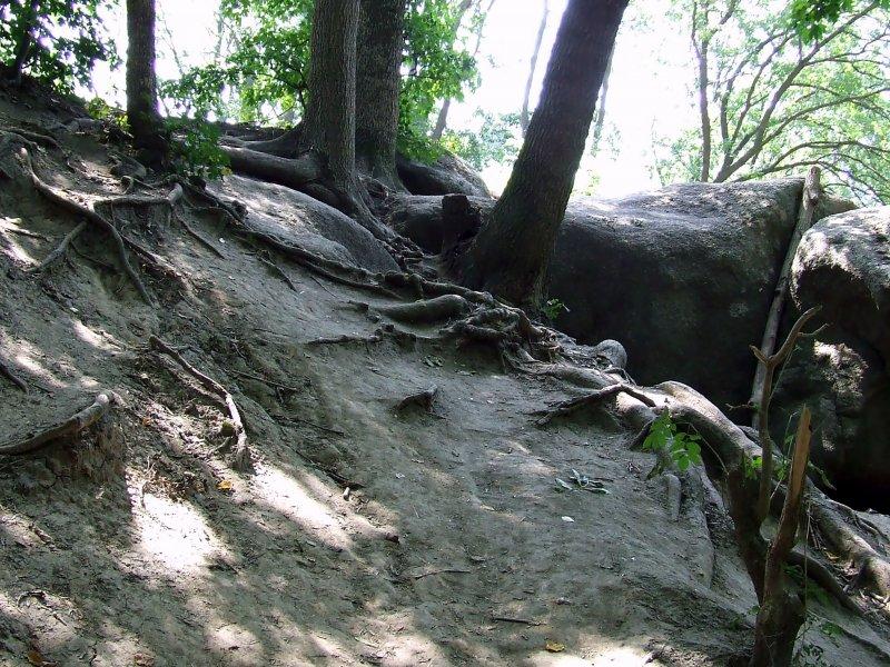 Седое  великолепие  корней