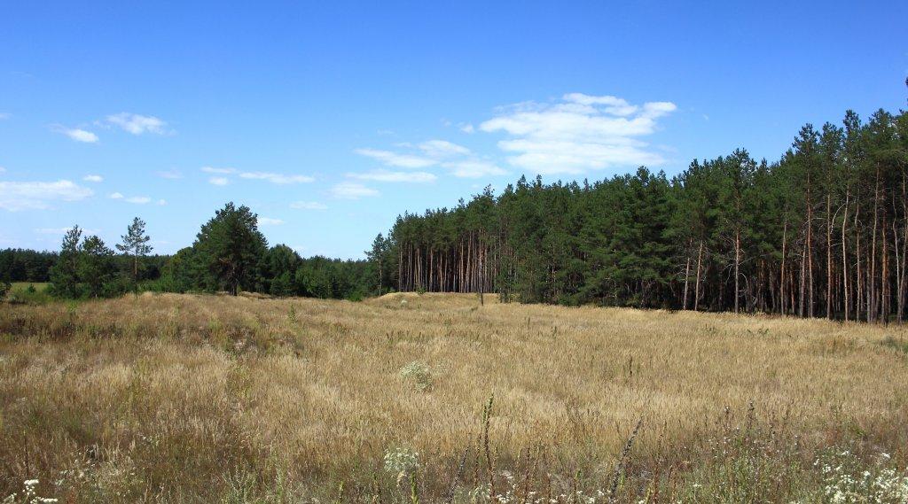 Задумчевый лес.